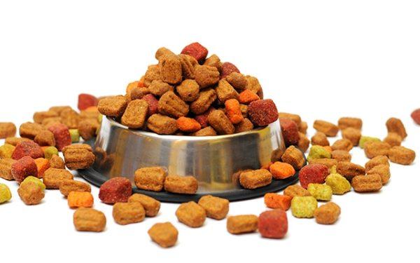 چه غذایی و چگونه به سگها غذا بدهیم؟