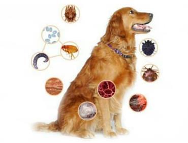 انگل های داخلی و خارجی در سگ ها