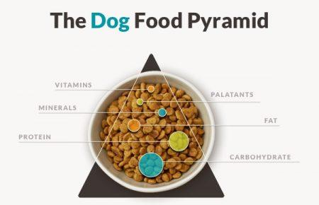 تغذیه سگ ها