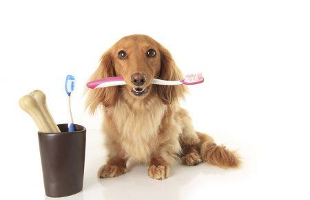 بررسی علل بوی بد دهان سگ