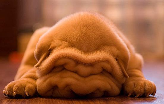 آموزش و تربیت سگ : کارهایی که باید در اولین شب رسیدن توله سگ انجام شود