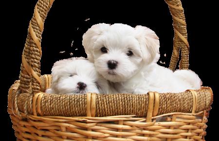آموزش و تربیت سگ : خرید سگ و نکات مهم قبل از انتخاب