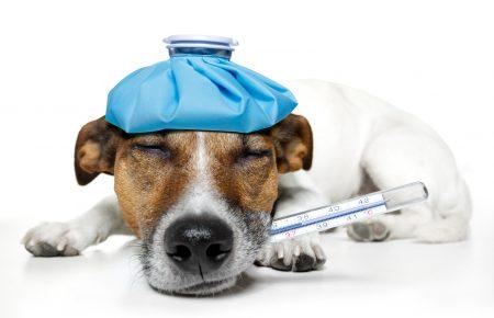 مراقبت از يک سگ بيمار