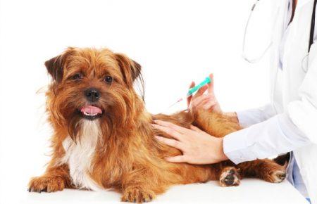 پیشگیری و کنترل بیماری در سگها با واکسیناسیون