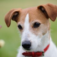 نادرستی های رفتاری سگ