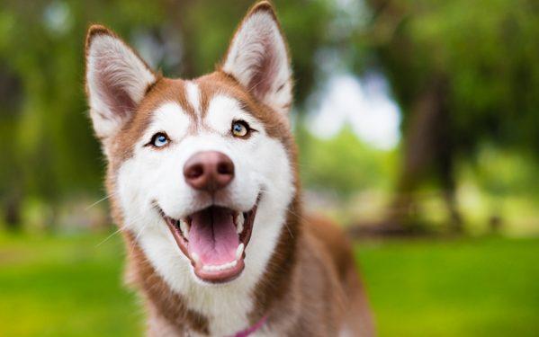 آموزش و تربیت سگ : همیشه سگ خود را شاد و سلامت نگه دارید