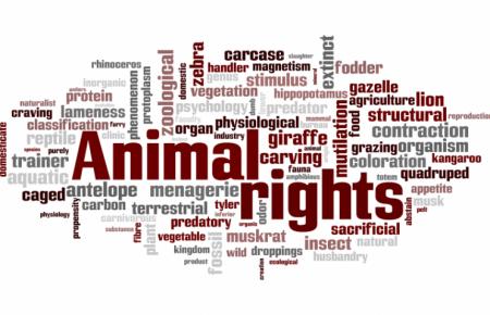 فلسفه وجودی حقوق حیوانات چیست؟!
