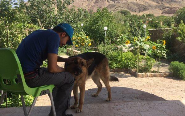 آموزش و تربیت سگ : فرمان آوردن توپ