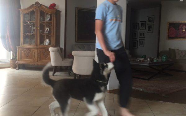 آموزش و تربیت سگ : هم قدم شدن با تشویقی
