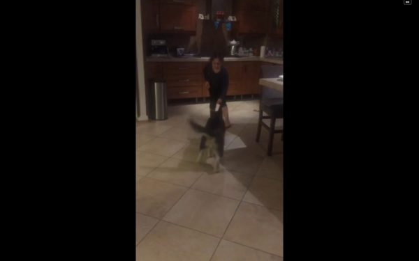 آموزش و تربیت سگ : افزایش فرمان پذیری