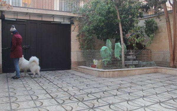 آموزش و تربیت سگ : آموزش هم قدم شدن