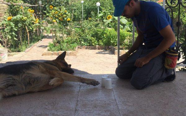 آموزش و تربیت سگ : بازی های تعاملی