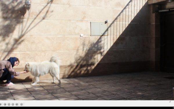 آموزش و تربیت سگ : آموزش فرمان بخواب از راه دور