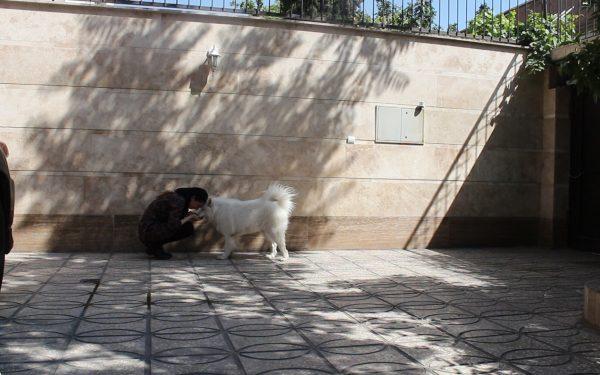 آموزش و تربیت سگ : فرمان از راه دور