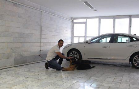 آموزش و تربیت سگ : فرمان بشین , فرمان بخواب