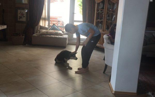 آموزش و تربیت سگ : فرمان بمان