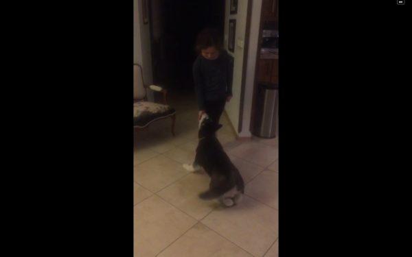 آموزش و تربیت سگ : رفتار شناسی و روان شناسی سگ ها