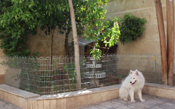 آموزش و تربیت سگ : فرمان ببین , افزایش فرمانپذیری