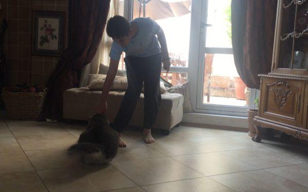 آموزش و تربیت سگ : فرمان بشین, فرمان ببین, فرمان بچرخ