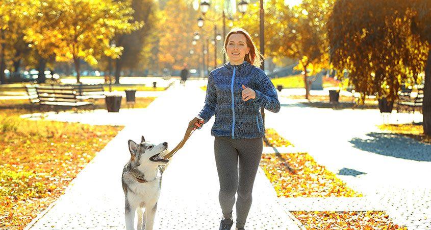 آموزش و تربیت سگ : 7 نکته برای بهبود رابطه شما با سگتان