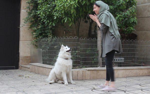آموزش و تربیت سگ : فرمان دست دادن سگ