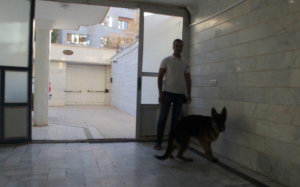 آموزش و تربیت سگ : خاموش کردن لامپ توسط سگ