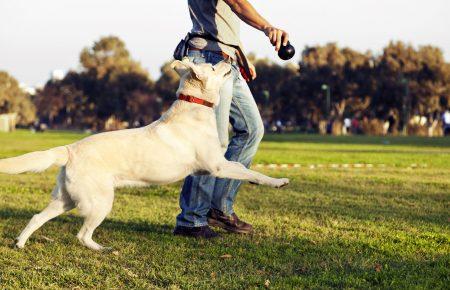 آموزش و تربیت سگ: اختصاص دادن زمانی برای آموزش و بازی های تعاملی