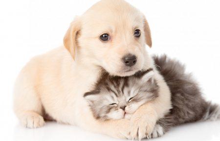 عقیم سازی، اخته کردن و حقوق حیوانات