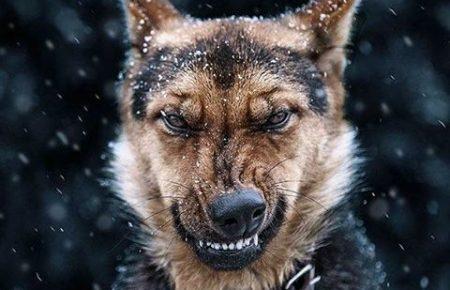 آموزش و تربیت سگ : سگ بتا (مشکل سازترین عضو گروه)
