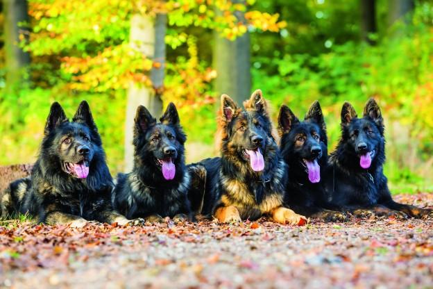 آموزش و تربیت سگ : نگرش اجتماعی سگها
