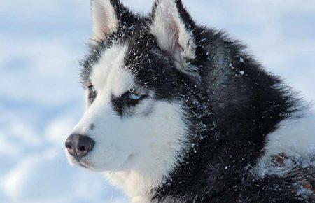 آموزش و تربیت سگ : 6 نکته در مورد سگ آلفا