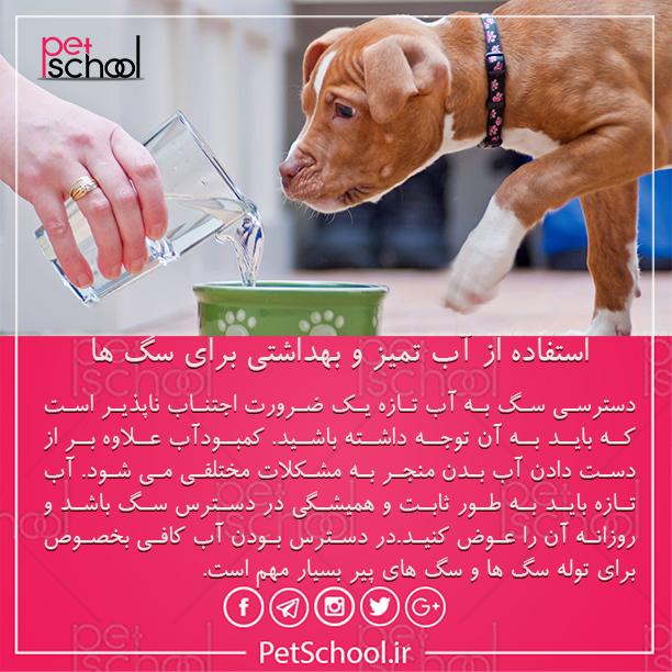 آموزش و تربیت سگ : استفاده از آب تمیز و بهداشتی برای سگ ها