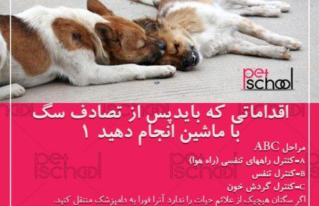 آموزش و تربیت سگ : اقداماتی که باید پس از تصادف سگ با ماشین انجام دهید 1