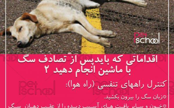 آموزش و تربیت سگ : اقداماتی که بایدپس از تصادف سگ 2