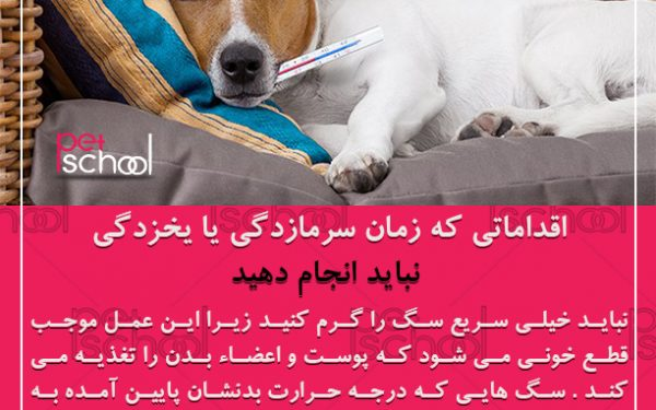 آموزش و تربیت سگ : اقداماتی که زمان سرمازدگی یا یخزدگی نباید انجام دهید