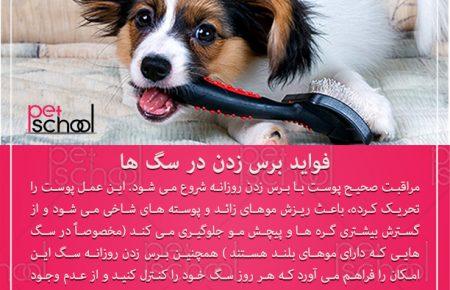 آموزش و تربیت سگ : فواید برس زدن در سگ ها