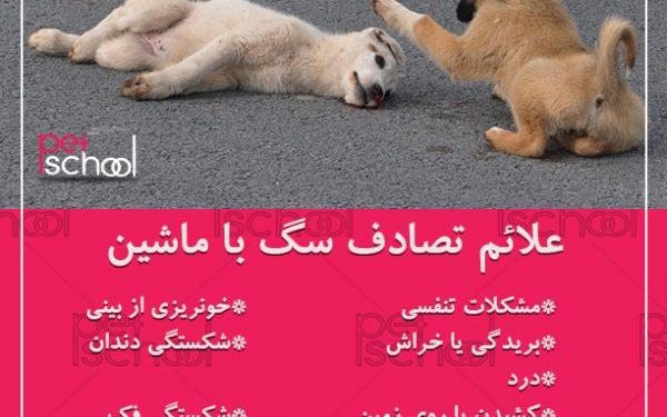 آموزش و تربیت سگ :علائم تصادف سگ با ماشین