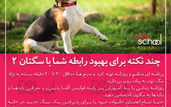 آموزش و تربیت سگ : چند نکته برای بهبود رابطه شما با سگتان 2