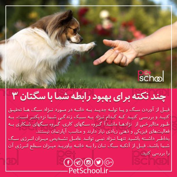 آموزش و تربیت سگ : چند نکته برای بهبود رابطه شما با سگتان 3