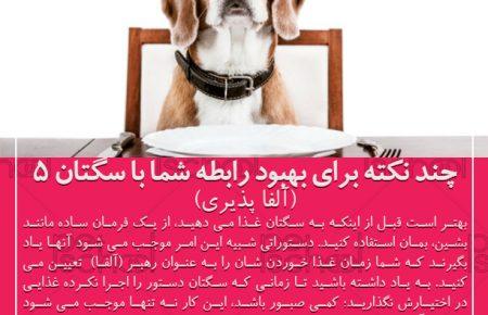 آموزش و تربیت سگ : چند نکته برای بهبود رابطه شما با سگتان 5