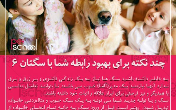 آموزش و تربیت سگ : چند نکته برای بهبود رابطه شما با سگتان 6