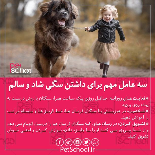 آموزش و تربیت سگ : سه عامل مهم برای داشتن سگی شاد و سالم