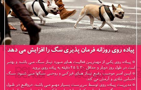 پیاده روی روزانه موجب فرمان پذیری هرچه بهتر سگ می شود