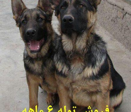 خرید و فروش سگ 1