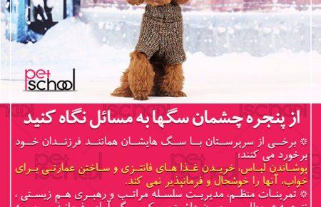 آموزش سگ : از پنجره چشمان سگها به مسائل نگاه کنید