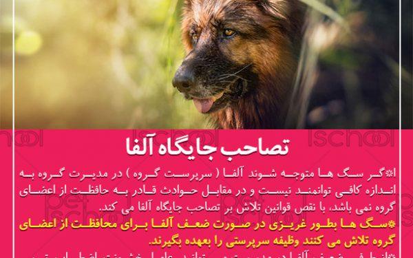 آموزش و تربیت سگ : تصاحب جایگاه آلفا