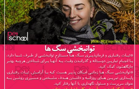 آموزش سگ: توانبخشی سگ ها
