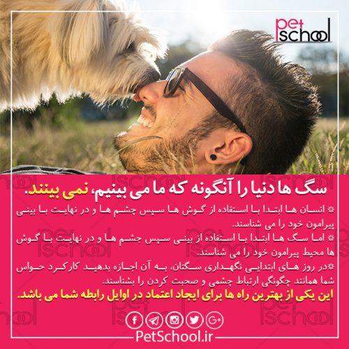 آموزش سگ : سگ ها دنیا را آنگونه که ما می بینیم، نمی بینند.
