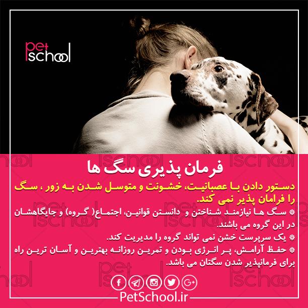 آموزش و تربیت سگ : فرمان پذیری سگ ها