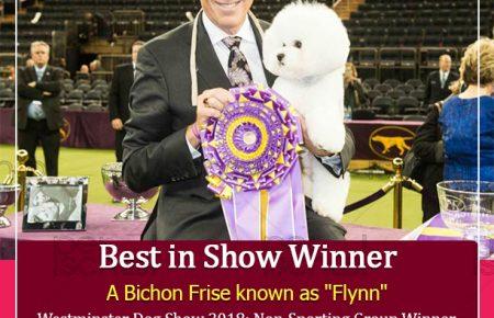 Westminster Dog Show 2018